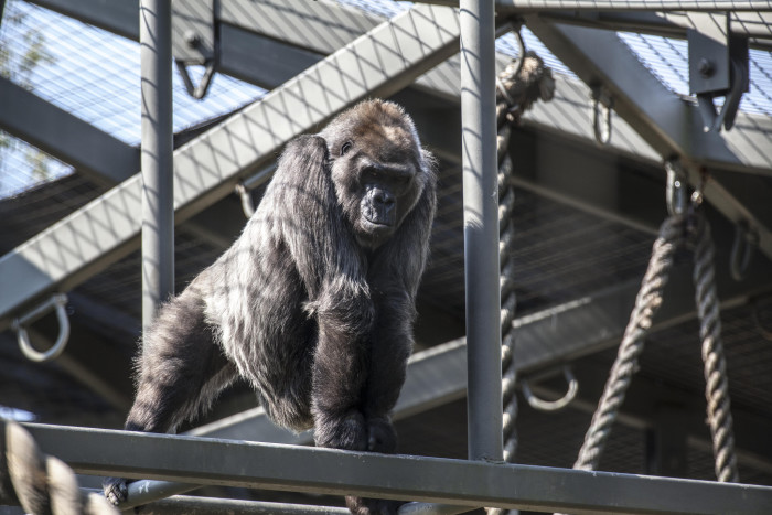 16) Here you will experience the best zoos in the nation and picking one for a daytrip will be quite the dilemma. (Toledo, Cleveland, Columbus, etc.)