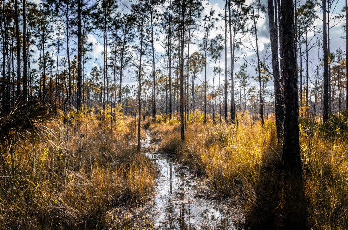 9. Big Cypress National Preserve