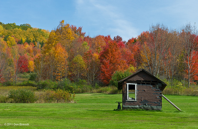 9. You are newly stunned each autumn by how breathtaking the foliage is when it changes colors.