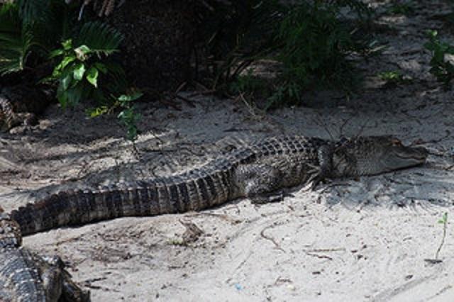 14.) Alligator Alley - Summerdale