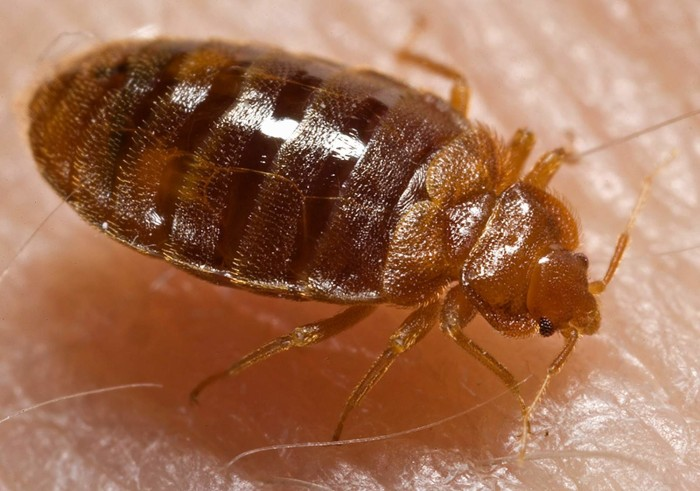 8. Don't Let the Bed Bugs Bite!