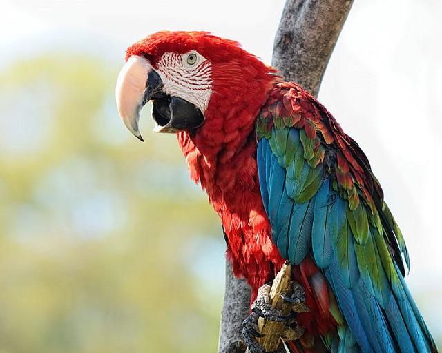 3.) Birmingham Zoo