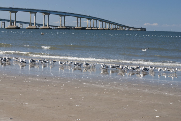 8. We Are Home To An Engineering Wonder of the World: Chesapeake Bay Bridge-Tunnel