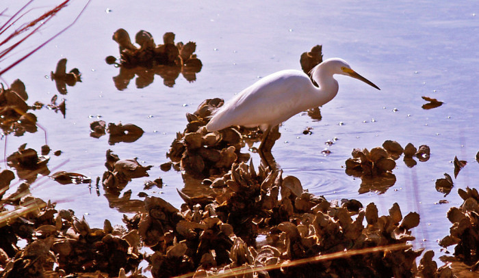 Cumberland Island is a wonderful place to experience many different types of wildlife.