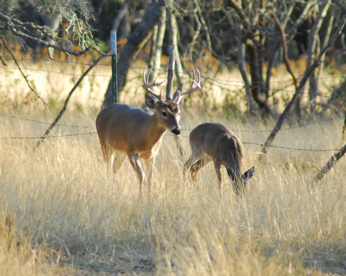 20) Opening day for deer season is pretty much a statewide holiday