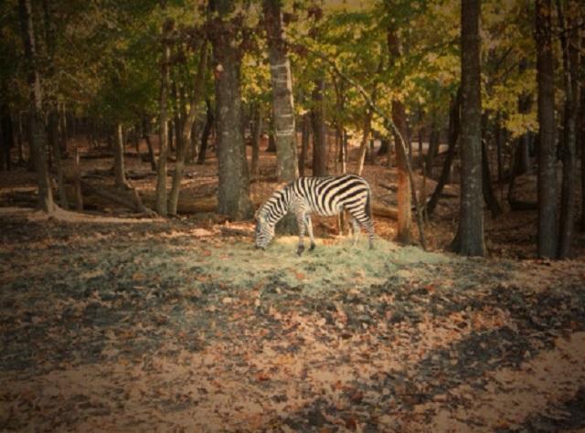 9.) Harmony Safari Park - Huntsville