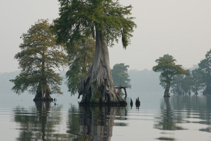 5. Lake Drummond, Great Dismal Swamp, Chesapeake