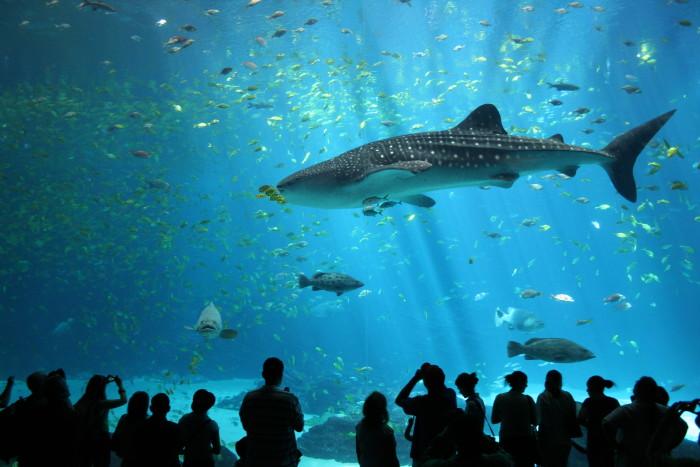 10. Georgia Aquarium