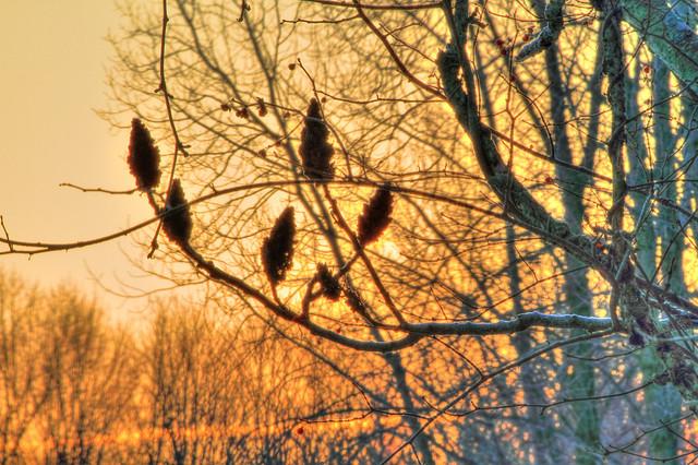 6) Maybury State Park