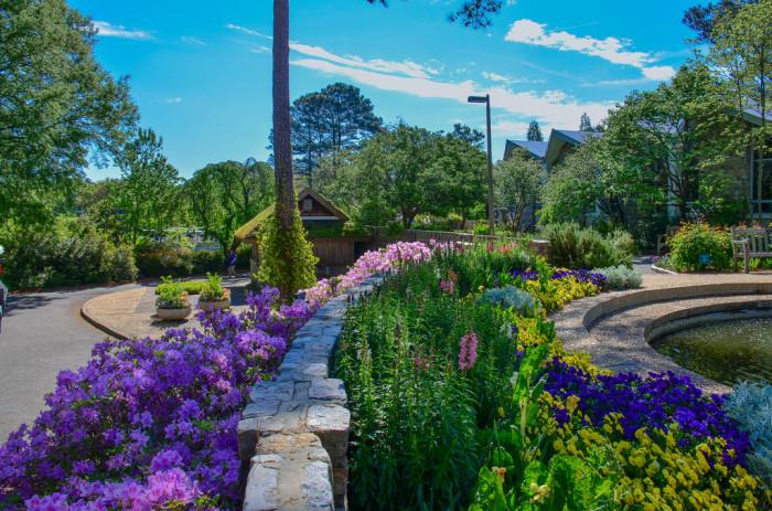 Norfolk Botanical