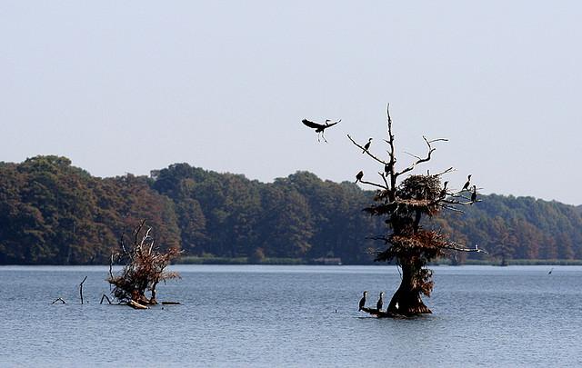7) Reelfoot Lake State Park