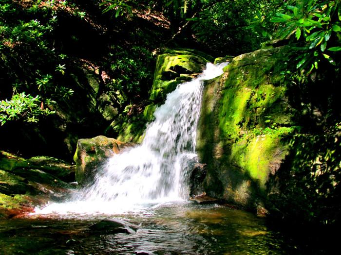 1. Raven Cliff Trail