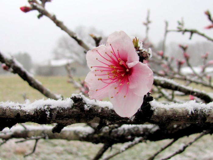 8. Just when it seems like winter will never end, spring is just around the corner.