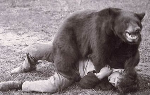 13.) Bear wrestling matches are illegal.