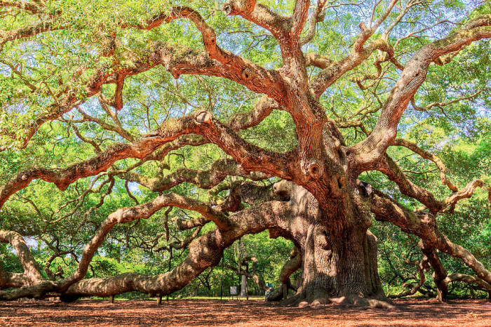 3. The Oldest Living Organism East Of The Mississippi