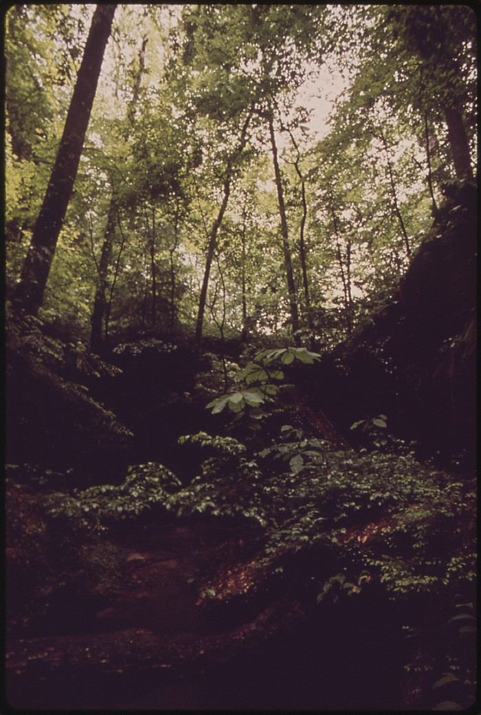 10. William Bankhead National Forest