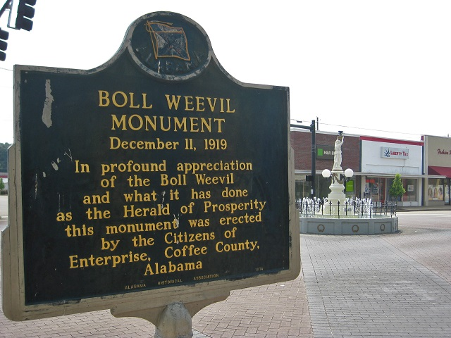 7.) The Boll Weevil Monument, initially built to encourage farmers to grow crops other than cotton, is the only monument in the world that's dedicated to an insect pest.  The monument is located in Enterprise.