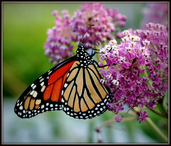 8. Butterfly Gardens (Appleton). Nothing says love more than flowers. Take your honey here and she'll be sure to swoon.