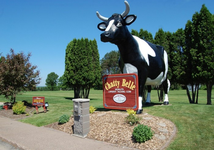 6. Chatty Belle (Neilsville). She's the world's largest talking cow.