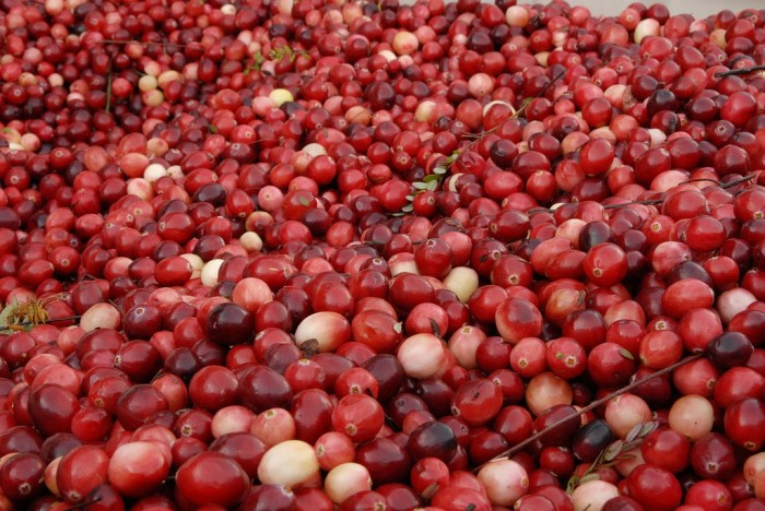 14. 100,000 people flood Warren, Wisconsin (population: 400) every year for the world's largest cranberry festival.