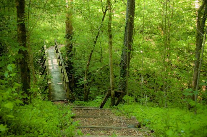 7. Visit Daniel Boone National Forest