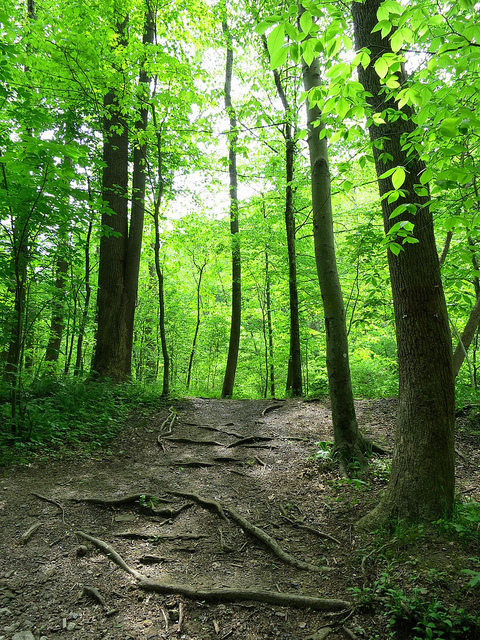 12) Visit one of the State forests!