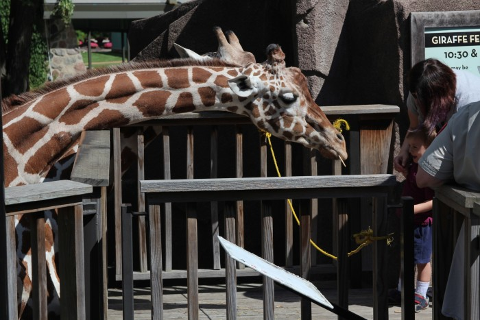 3. You can feed giraffes crackers  at the Timbavati Wildlife Park.