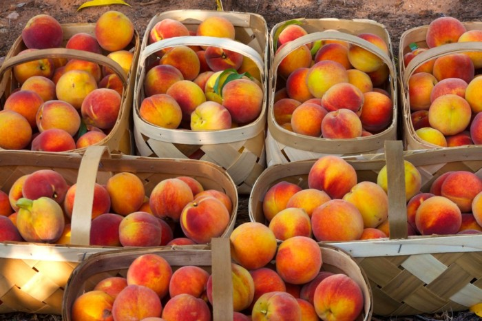 16. Second Biggest Producer of Peaches