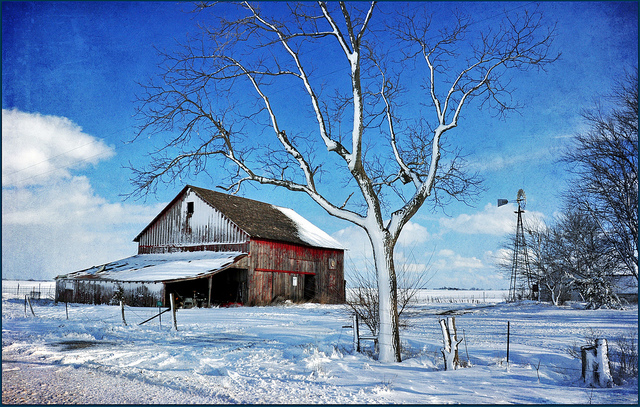 11. A frosty old barn withstands a heavy snow in Jordan, Iowa.