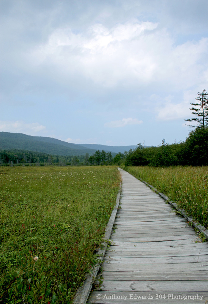 Due to the land being highly acidic, it is pretty ecologically sensitive. So when you visit the Glades, you aren't allowed to leave the developed paths.