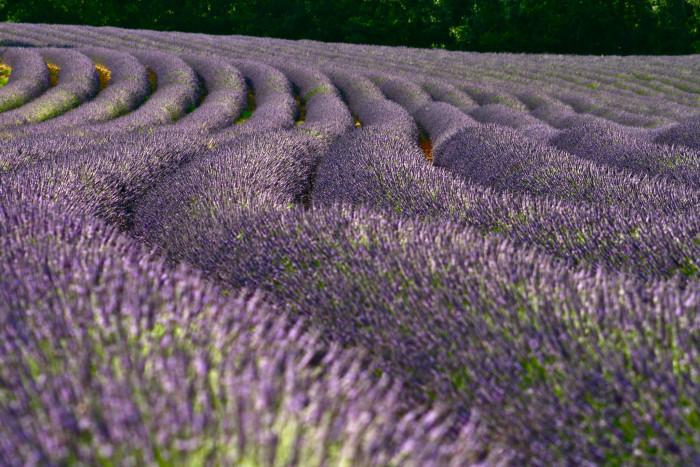 7. La Bastide des Lavendes, York, SC