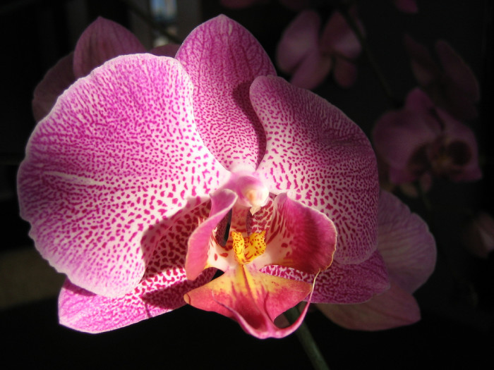 4. Marvel at the World of Orchids in Kissimmee