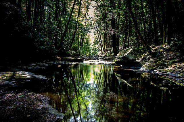 14. You spent many beautiful childhood afternoons hiking in one of Pennsylvania's many state parks.