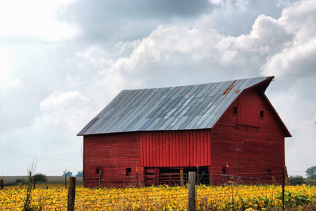 14. This vibrant barn stands out against an autumn field south of Nevada, Iowa.