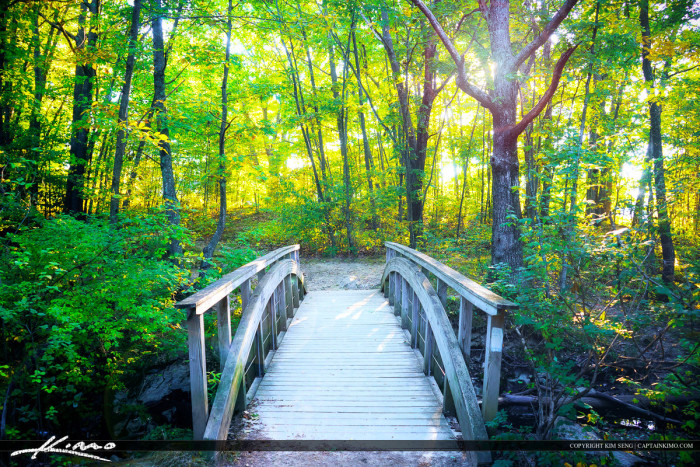 18. Wooden Bridge Forest Trail  located in Portland, Maine