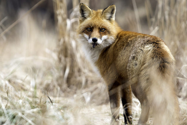 20 Stunning Photographs of Pennsylvania Wildlife