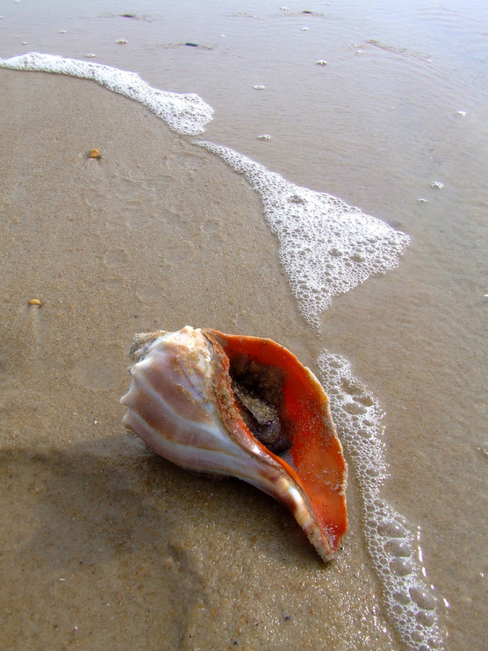 7. Conch - Can refer to a beautiful shell or a tasty treat.