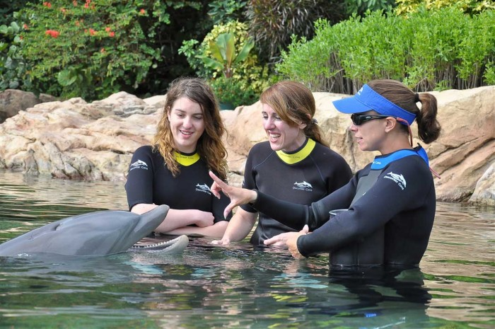 6. Swim with the dolphins at Discovery Cove in Orlando.