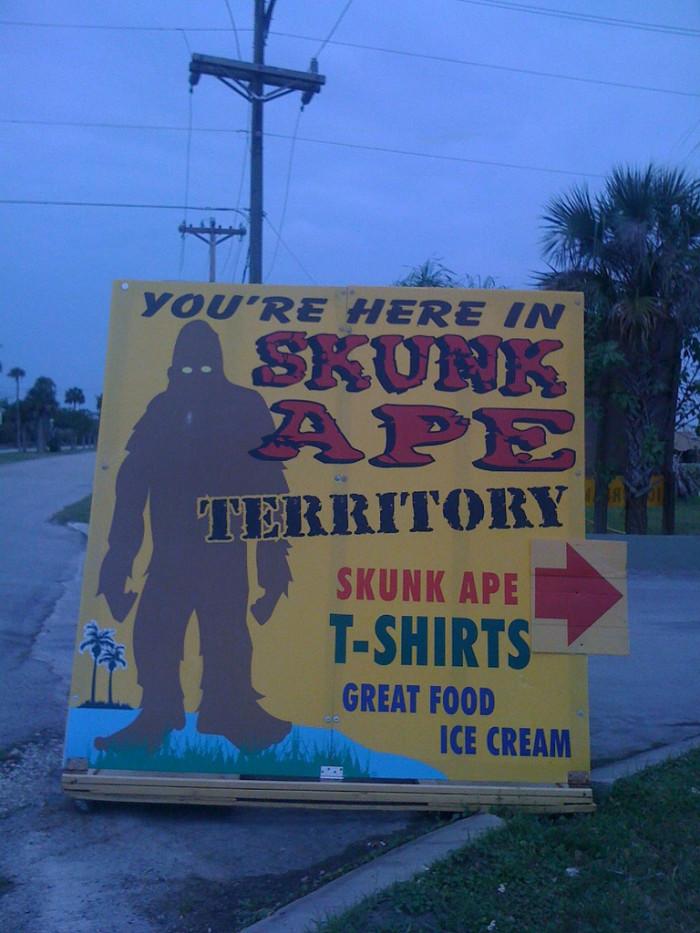 10. Skunk Ape - Florida's Bigfoot.