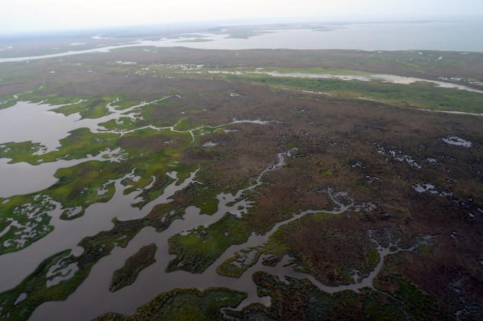 11) Lower Alabama coastal wetlands