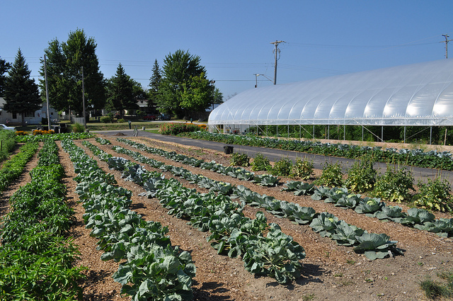 ... And urban farming, as pictured here at the Harvesting Earth Education Farm in Flint, is redefining cities all over the state...