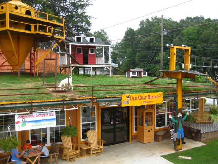 Goats on the Roof in Tiger, GA
