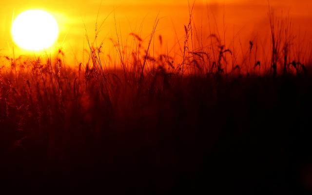 5. A fiery sunset in a field near Mount Vernon.