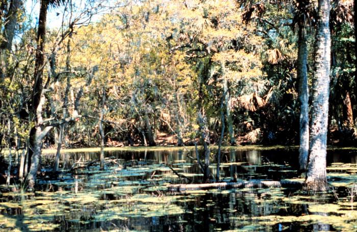 6. ACE River Basin