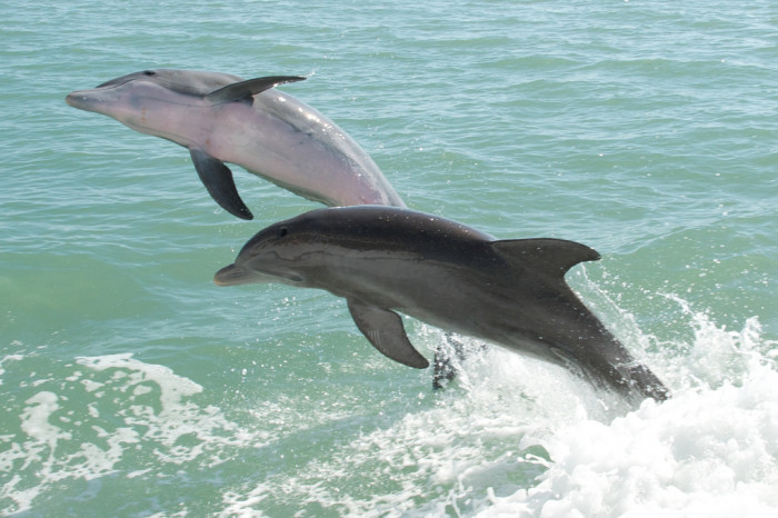10. Take a dolphin cruise and explore the several beautiful islands of Lee County, including Sanibel, Gasparilla and Captiva.