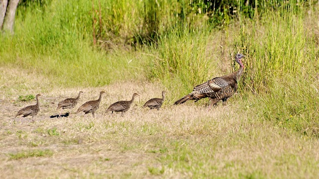 15. Gobblers Crossing, Alabama - These must be some pretty special gobblers to have a community named after them.