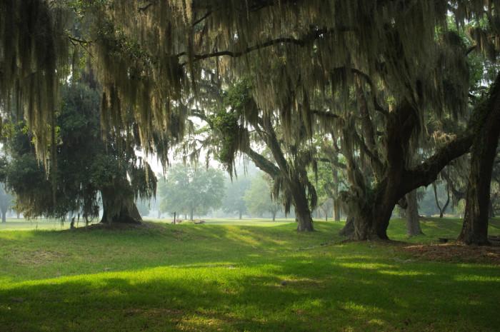 Trees at Fort Frederica, St. Simons Island, GA