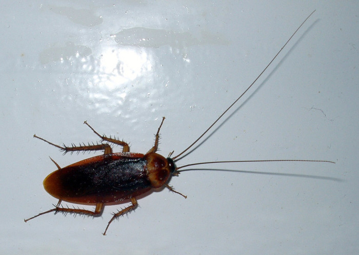 12. Palmetto bug - Roach's bigger, badder, uglier cousin. Especially good at flying at your face while you try to get into your house.