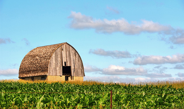 6. An abandoned barn sits in a sunny Story County field.