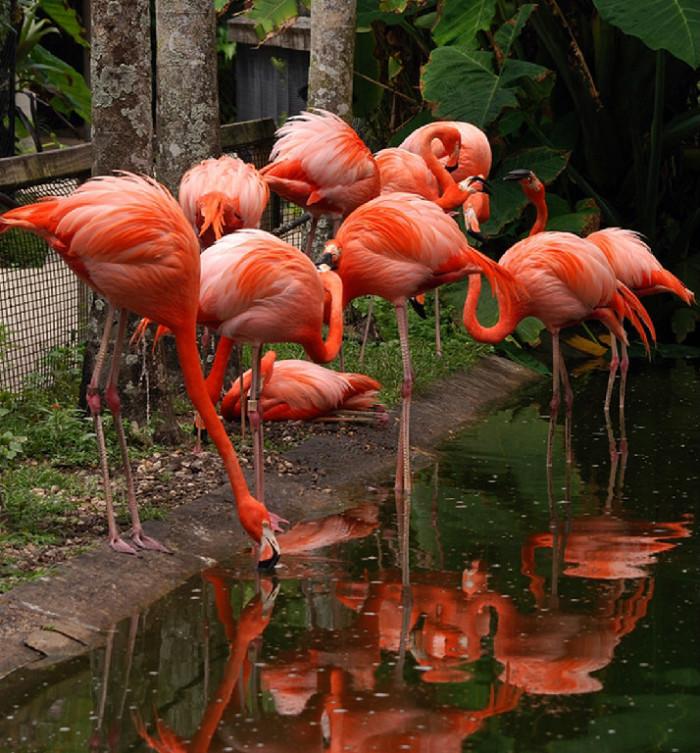 11. Memorial Day KidzFest at Flamingo Gardens in Davie, FL
